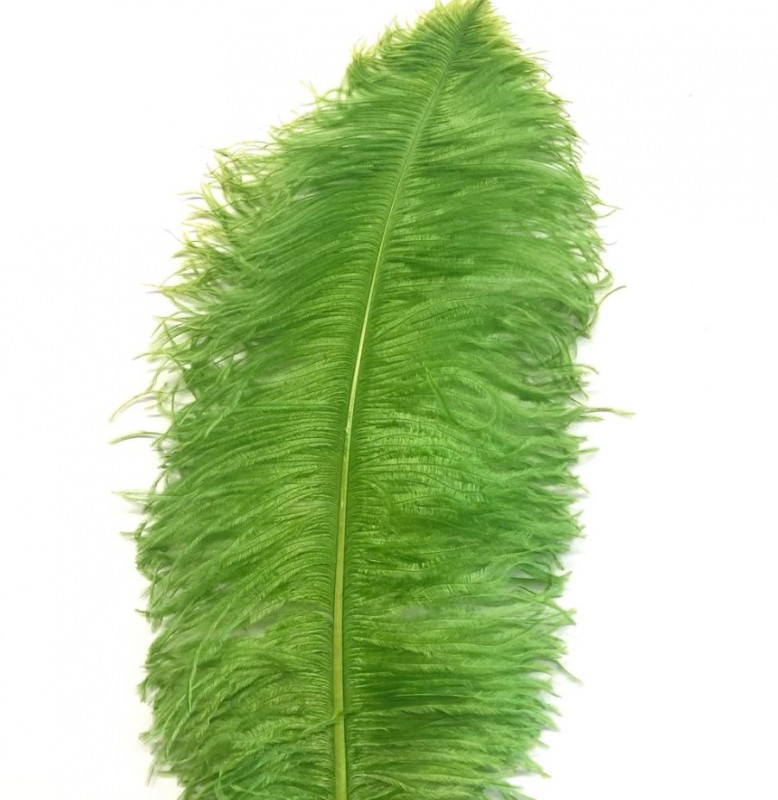 Ostrich Feather Plume 55-60cm Lime Green