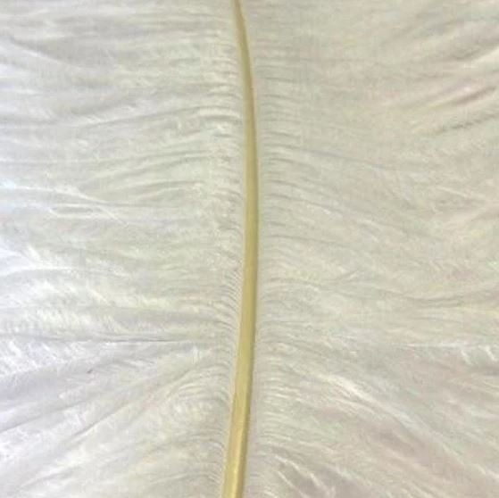 Ostrich Feather Plume 60cm White