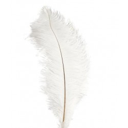 Ostrich Feather Plume 55-60cm White