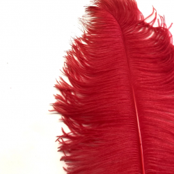 Ostrich Feather Plume 60cm Red