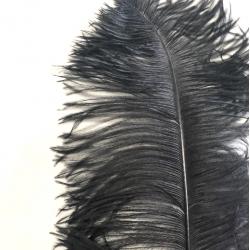 Ostrich Feather Plume 55-60cm Black