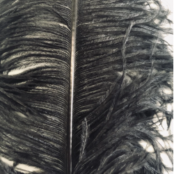 Ostrich Feather Plume 60cm Black