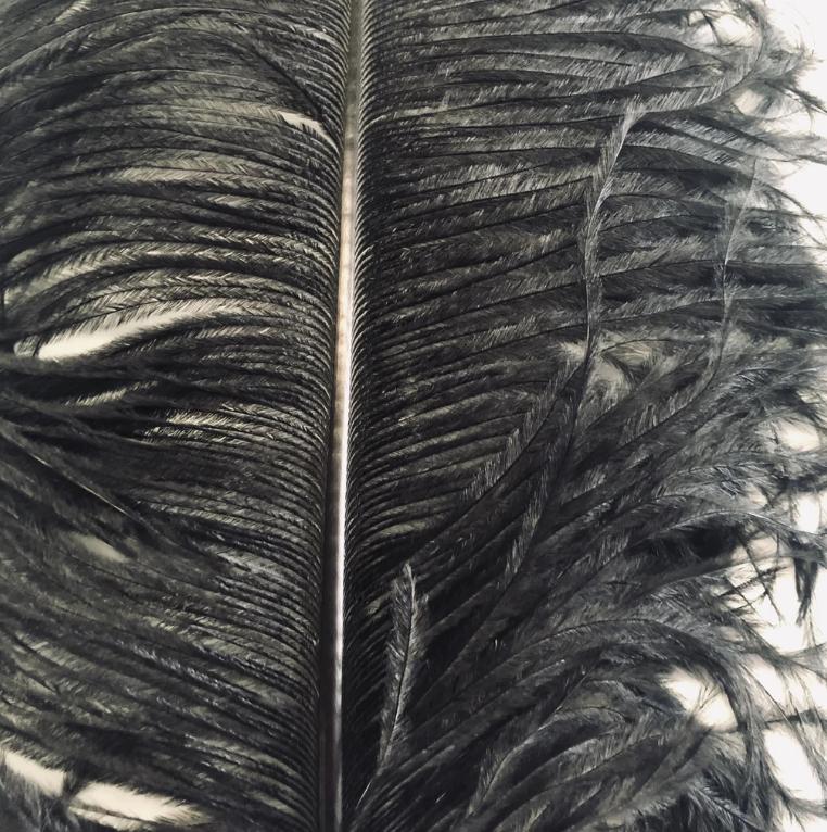 Ostrich Feather Plume 60cm Black