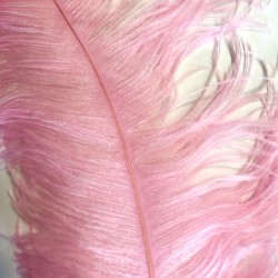 Ostrich Feather Plume 55-60cm Candy Pink