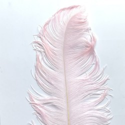 Ostrich Feather Plume 55-60cm Light Pink